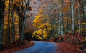 Picture road, autumn, forest, leaves, trees, turn
