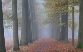 Picture autumn, forest, trees, nature, fog, trunks, morning