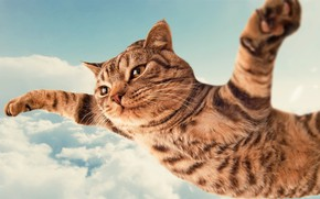 Picture Clouds, Sky, Cat, Funny, Humor