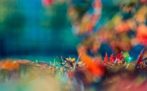 Picture autumn, blur, the colors of autumn, bokeh, autumn leaves
