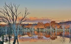Picture Australia, Woodland Sanctuary, Mulligans Flat, ACT, Canberra