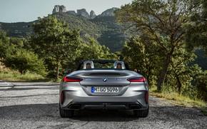 Picture grey, vegetation, BMW, Roadster, roadside, feed, BMW Z4, M40i, Z4, 2019, G29