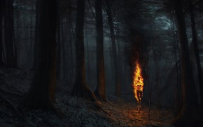 Picture night, fire, flame, Forest