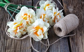 Picture flowers, bouquet, spring, daffodils