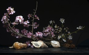 Picture branch, shell, still life