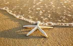 Picture sand, sea, beach, summer, star, summer, beach, sea, sand, starfish