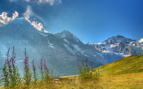 Picture the sky, grass, the sun, clouds, flowers, mountains, rocks, Switzerland, valley, Alps, hill, Bernese Oberland