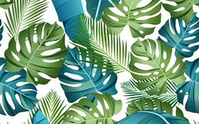 Picture white, leaves, background, Texture, tropical