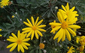 Picture Flowers, Yellow flowers, Yellow flowers
