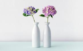 Picture Flower, White, Vase