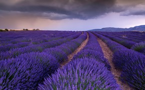 Picture field, the sky, flowers, clouds, overcast, hills, perspective, France, dal, the evening, horizon, the ranks, …