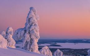 Picture winter, snow, trees, landscape, nature, morning, forest, Finland, Lapland, Valtteri Mulkahainen