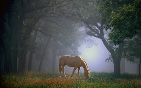 Picture forest, summer, grass, trees, branches, nature, fog, Park, horse, trunks, glade, foliage, horse, beauty, morning, …