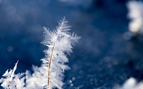 Picture Nature, Winter, Wallpaper, Ice, Macro