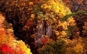 Picture autumn, forest, rocks, Osaka, Miyagi
