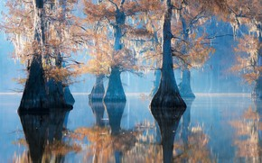 Picture forest, trees, flood