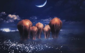 Picture flowers, rendering, elephants, art, shore, family, family, night, clouds, the dark background, photoart, elephants, planet, …