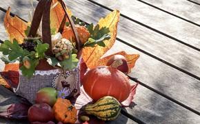 Picture autumn, leaves, apples, pumpkin, acorns