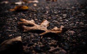 Picture autumn, asphalt, macro, sheet, dry leaves
