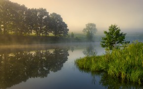 Picture trees, fog, river, morning