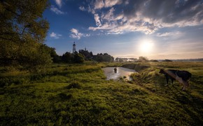 Picture summer, the sky, nature, dawn, cows, Church, Russia, Andrei
