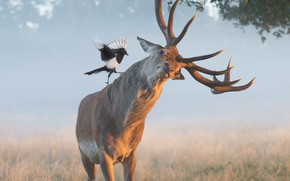 Picture grass, branches, nature, animal, bird, deer