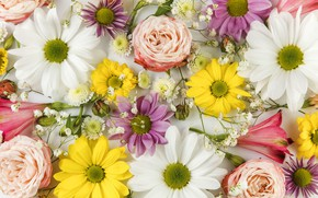 Picture flowers, buds, chrysanthemum, different