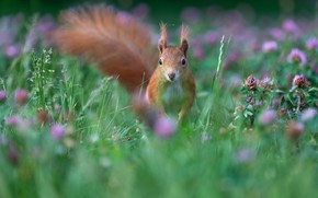 Picture grass, flowers, nature, pose, protein, lawn, rodent