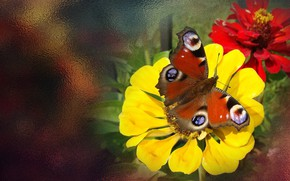 Picture summer, flowers, butterfly, the Wallpapers, author's photo by Elena Anikina