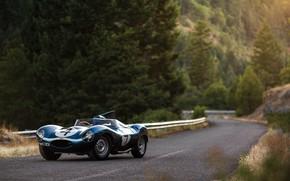 Picture Road, Race Car, Forest, Jaguar D-Type