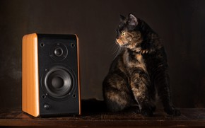 Picture cat, look, pose, music, the dark background, table, muzzle, column, speaker, sitting, Studio, spotted, motley