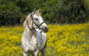 Picture field, flowers, horse, Nature