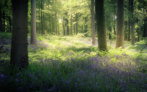 Picture greens, forest, light, trees, flowers, branches, Park, thickets, trunks, glade, England, treatment, blur, spring, haze, …