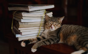 Picture cat, cat, pose, the dark background, books, sleep, sleeping, lies, stack, face, laziness, textbooks