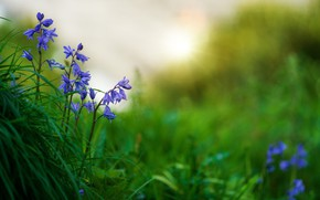 Picture grass, flowers, nature, blur, spring