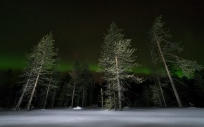 Picture winter, forest, night, lights