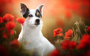 Picture dog, look, flowers, face, blur, Maki