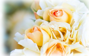 Picture flowers, roses, bouquet, yellow, white, light background, buds, bokeh