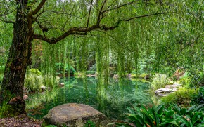 Picture greens, grass, leaves, trees, branches, pond, Park, stones, USA, Gibbs Gardens