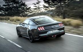 Picture road, Mustang, Ford, back, 2018, Bullitt, fastback