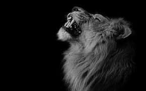 Picture Leo, fangs, beast