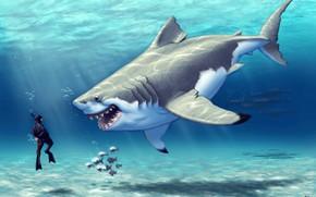 Picture The ocean, Sea, Fish, Shark, Fish, Predator, Art, Food, Under water, Joy, Diver, Who hunts …