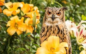 Picture look, flowers, owl, bird, Lily, portrait, yellow, garden, owl