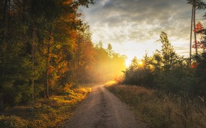 Picture road, autumn, forest, morning