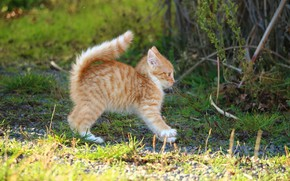 Picture grass, pose, kitty, baby, red