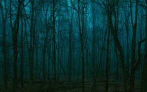 Picture forest, trees, nature, dark, twilight