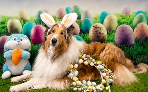 Picture holiday, eggs, dog, Easter, wreath