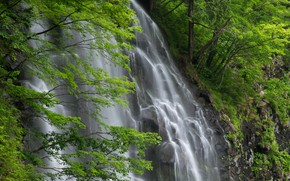 Picture branches, rocks, foliage, waterfall, stream
