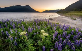 Picture flowers, mountains, Bay