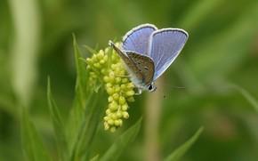 Picture butterfly, butterfly, bokeh